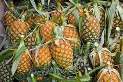 Mucchio dell'ananas Fotografie Stock Libere da Diritti