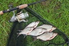 Mucchio dell'orata bianca o del pesce d'argento e dell'orata dell'bianco-occhio su Th Fotografia Stock Libera da Diritti