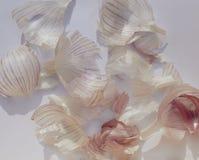 Mucchio della buccia dell'aglio Fotografia Stock
