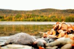 Mucchio della foglia sulla riva del fiume con la foresta maestosa di autunno Immagini Stock