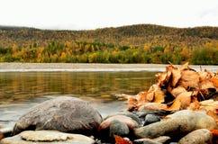 Mucchio della foglia sulla riva del fiume con la foresta maestosa di autunno Fotografia Stock Libera da Diritti