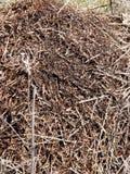 Mucchio della formica fotografia stock libera da diritti