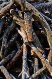Mucchio della legna da ardere Fotografie Stock