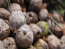 Mucchio della noce di cocco archivi video