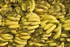 Mucchio delle banane Fotografia Stock Libera da Diritti