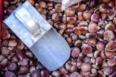 Mucchio delle castagne crude e di mettere su di alluminio del mestolo Fotografie Stock