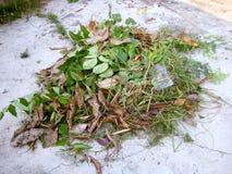 Mucchio delle foglie asciutte e fresche Fotografie Stock Libere da Diritti