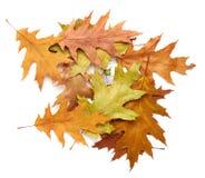 Mucchio delle foglie di autunno gialle Immagini Stock