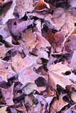 Mucchio delle foglie di caduta fotografie stock