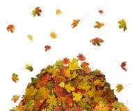 Mucchio delle foglie di caduta Fotografia Stock Libera da Diritti