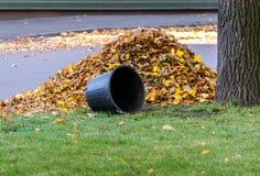 Mucchio delle foglie e del canestro Fotografie Stock