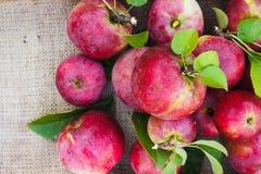 Mucchio delle mele mature rosse sulla tela da imballaggio Fotografie Stock Libere da Diritti