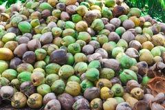 Mucchio delle noci di cocco verdi sulla terra Fotografia Stock