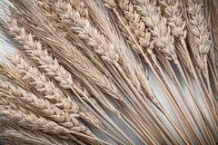 Mucchio delle orecchie del grano della segale su fondo blu direttamente sopra Fotografie Stock Libere da Diritti