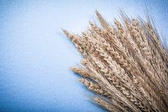 Mucchio delle orecchie dorate del grano della segale su fondo blu Immagini Stock Libere da Diritti