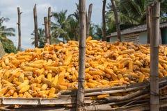 Mucchio delle pannocchie di granturco raccolte e sbucciate, Belathur, India Immagine Stock