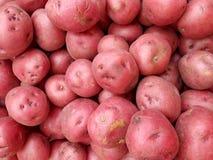 Mucchio delle patate rosse Immagini Stock Libere da Diritti
