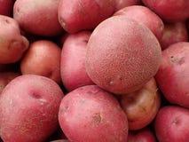 Mucchio delle patate rosse da vendere Immagini Stock