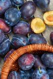 Mucchio delle prugne fresche Fotografie Stock