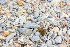 Mucchio delle rocce messicane del ciottolo Immagini Stock