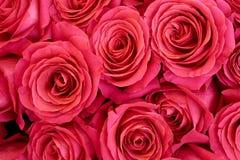 Mucchio delle rose Fotografia Stock Libera da Diritti