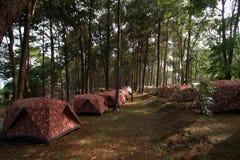 Mucchio delle tende di campeggio al campeggio Immagini Stock