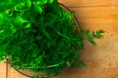 Mucchio delle teste organiche fresche del letucce Il mucchio del raccolto dell'insalata verde del taglio va di recente sulla tavo Immagini Stock