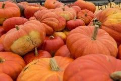 Mucchio delle zucche dell'arancia del raccolto fotografia stock