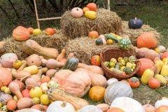 Mucchio delle zucche e delle zucche colorate in Moldavia Fotografia Stock