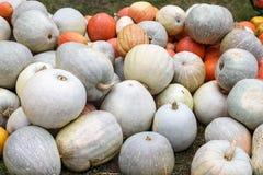 Mucchio delle zucche e delle zucche colorate in Moldavia Immagini Stock