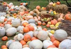 Mucchio delle zucche e delle zucche colorate in Moldavia Fotografie Stock