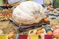 Mucchio delle zucche e delle zucche colorate in Moldavia Fotografia Stock Libera da Diritti
