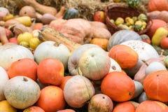 Mucchio delle zucche e delle zucche colorate in Moldavia Fotografie Stock Libere da Diritti
