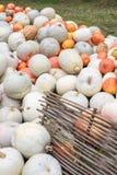 Mucchio delle zucche e delle zucche colorate in Moldavia Immagini Stock Libere da Diritti