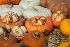 Mucchio delle zucche Fondo per la stagione di autunno Fotografie Stock Libere da Diritti