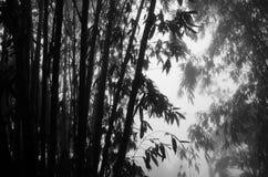 mucchio di ??Bamboo fotografia stock libera da diritti