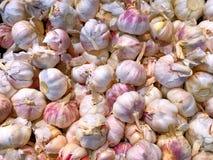 Mucchio di aglio fresco Fotografia Stock