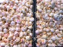 Mucchio di aglio fresco Immagini Stock Libere da Diritti
