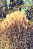 Mucchio di alta erba Immagini Stock