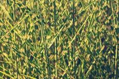 Mucchio di alta erba Immagini Stock Libere da Diritti