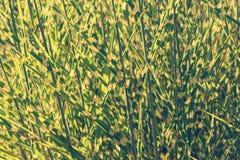 Mucchio di alta erba Immagine Stock Libera da Diritti