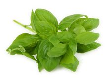 Mucchio di basilico verde fresco fotografia stock