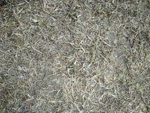 Mucchio di fieno, covone di erba asciutta, fieno, paglia, struttura, fondo astratto fotografie stock libere da diritti