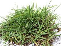 Mucchio di fieno dell'erba verde Fotografie Stock