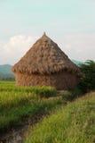 Mucchio di fieno nel giacimento del riso della Tailandia Fotografia Stock