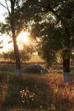 Mucchio di fieno sul tramonto di autunno Fotografia Stock Libera da Diritti