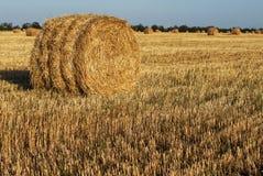Mucchio di fieno in un campo di grano Immagini Stock