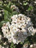 Mucchio di fiori Fotografia Stock Libera da Diritti