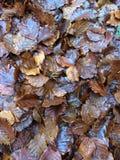 Mucchio di foglie in autunno Fotografie Stock