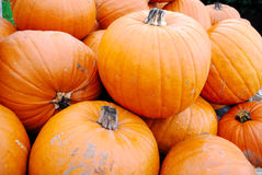 Mucchio di grandi zucche arancioni Immagini Stock Libere da Diritti